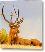 Bull Elk Resting In The Grass Metal Print
