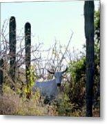 Bull In The Desert Of Mexico Metal Print