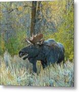 Bull Moose In The Evening Metal Print