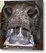 Bull Nose Metal Print