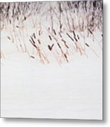 Bull Rushes In The Snow Db Metal Print