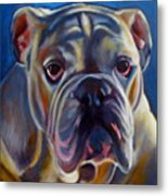 Bulldog Expression 2 Metal Print