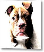 Bulldog Puppy Metal Print by Michael Tompsett
