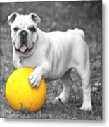 Bulldog Soccer Metal Print