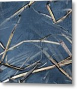 Bulrush Stalks Metal Print
