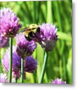 Bumble Bee And Chives Metal Print