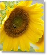 Bumble Bee And The Sunflower Metal Print