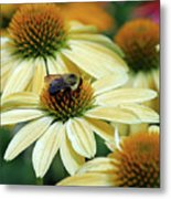 Bumble Bee At Work Metal Print