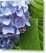 Bumble Bee Blues Metal Print