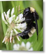 Bumble Bee By The Pond Metal Print