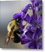 Bumble Bee Doing Lunch Metal Print