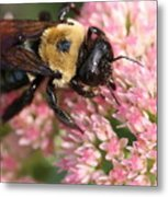 Bumble Bee Macro Metal Print