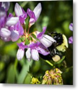 Bumble Bee Pollinating A Flower Metal Print