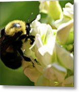 Bumble Bee Metal Print by Valeria Donaldson