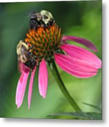 Bumble Bees At Work Metal Print