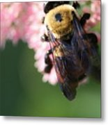 Bumble From Above Metal Print