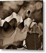 Bumble Metal Print by Monroe Snook
