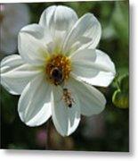Bumblebee And Bee Metal Print