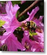 Bumblebee In Azalea Metal Print