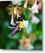 Bumblebee On Abelia Metal Print