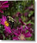 Bumbles In The Fall Metal Print