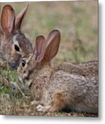 Bunny Encounter Metal Print
