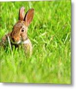 Bunny In Field  Metal Print