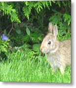 Bunny In Repose Metal Print
