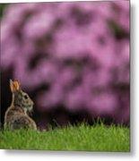Bunny In The Yard Metal Print