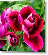 Burgundy Rose And Rose Bud Metal Print