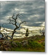 Burmis Tree And Wind Swept Pines Metal Print