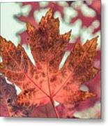 Burns Red Metal Print