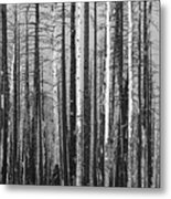 Burnt Forest Metal Print