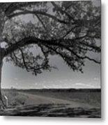 Burr Oak Tree Metal Print