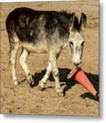 Burro Playing With Safety Cone Metal Print