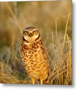 Burrowing Owl At Dawn Metal Print