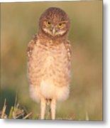 Burrowing Owl Fledgling I Metal Print