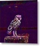 Burrowing Owl Small Owl Bird Nature  Metal Print