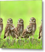 Burrowing Owl Metal Print by Thy Bun