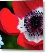 Burst Of Red Metal Print
