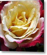 Burst Of Rose Metal Print