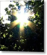 Burst Of Sunlight Metal Print