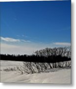 Bush In The Snow  Metal Print