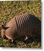 Busy Armadillo Metal Print