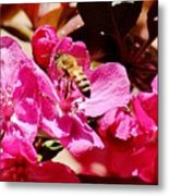 Busy As A Bee 031015 Metal Print
