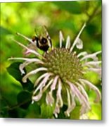 Busy As A Bee Metal Print by Valeria Donaldson