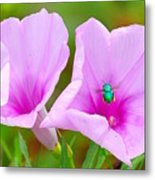 Busy Bug 2 Metal Print