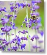 Busy In Lavender 3 Metal Print