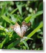 Butter Fly Metal Print