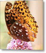 Butter Fly Thrown Looking Left Metal Print